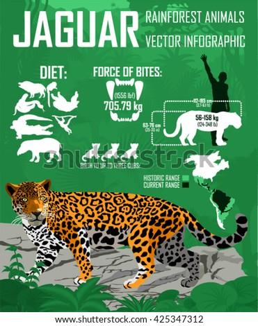 Vector rainforest jungle Jaguar infographic - stock vector