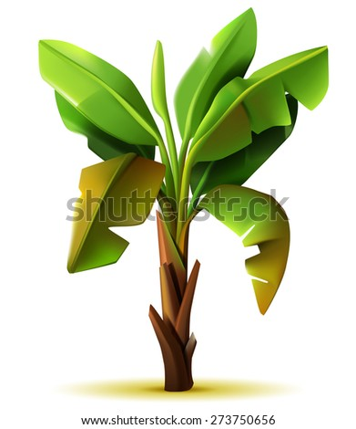 Vector realistic isolated banana tree on white background - stock vector