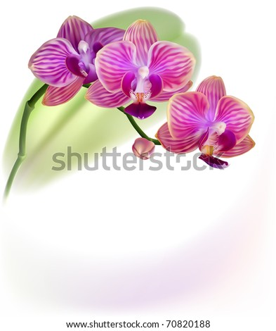 Vector realistic purple orchid flower isolated on white background - stock vector