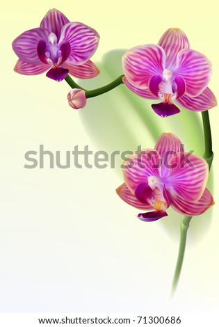 Vector realistic purple orchid flower on colorful background - stock vector