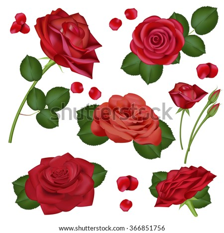 Vector realistic red rose flowers on white background for design, banners, invitation of the wedding, birthday, Valentine's Day, Mother's Day, gift cards, congratulation. Decorative floral  elements. - stock vector