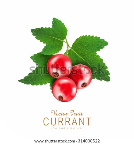 vector red currant isolated on a white background - stock vector