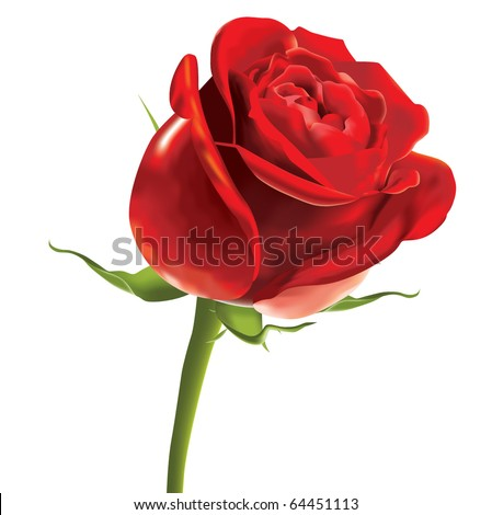 vector red rose - stock vector