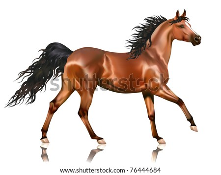 Vector running bay arabian horse isolated on white background - stock vector