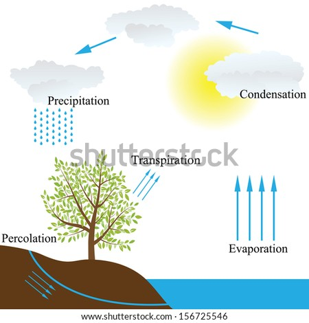 Vector schematic representation of the water cycle in nature - stock vector