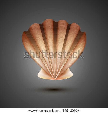 vector sea shell on a gray background