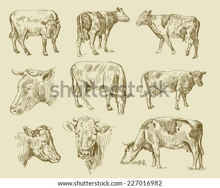 vector seamless cows hand draw sketch set - stock vector