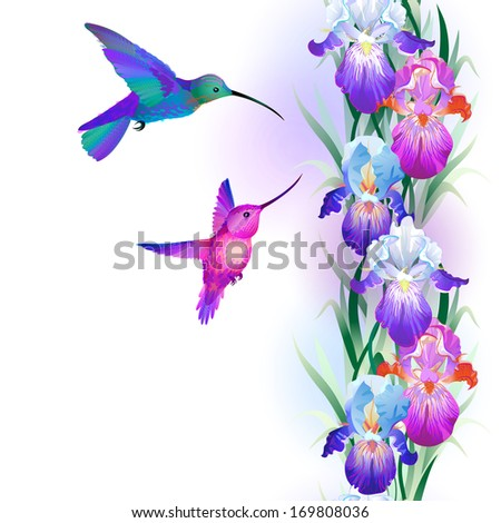 Vector seamless pattern with bright multicolored Iris flowers and hummingbirds