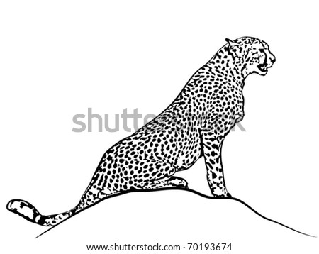 Vector sedentary cheetah. - stock vector