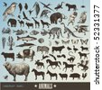 vector set: animals - collection of 60 detailed animal illustrations and animal silhouettes - stock photo
