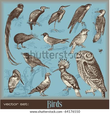 vector set: birds - variety of vintage bird illustrations - stock vector