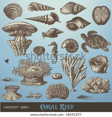 vector set: coral reef - variety of sea-design elements including different corals, shells and animals - stock vector