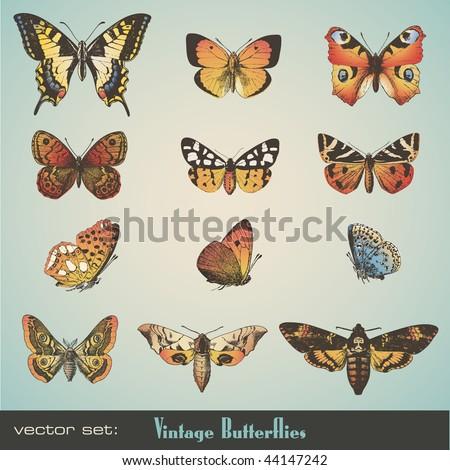 vector set: detailed vintage butterflies - stock vector