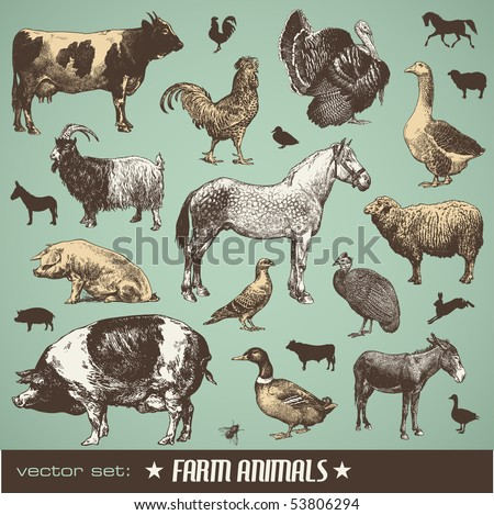 vector set: farm animals - various retro-style illustrations - stock vector