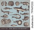 vector set: fish, shells and seafood (set 2) - variety of detailed vintage illustrations - stock photo
