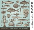 vector set: fish, shells and seafood - variety of detailed vintage illustrations - stock photo