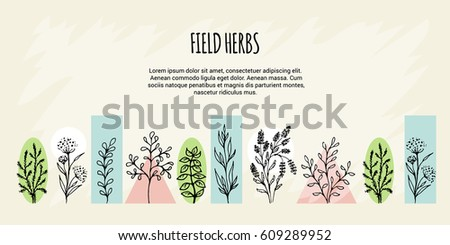 Vector set in the form of a banner on a theme of field grasses, flowers and plants. Spring Green. It is executed in the form of a sketch. All objects are isolated.