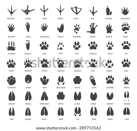 Vector set of animal tracks - stock vector
