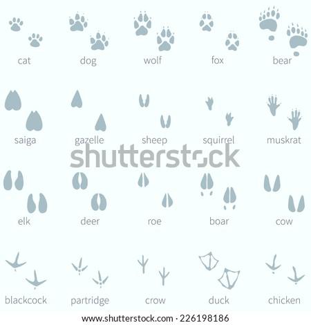 Vector Set of Animals Footprint  in the Snow - stock vector