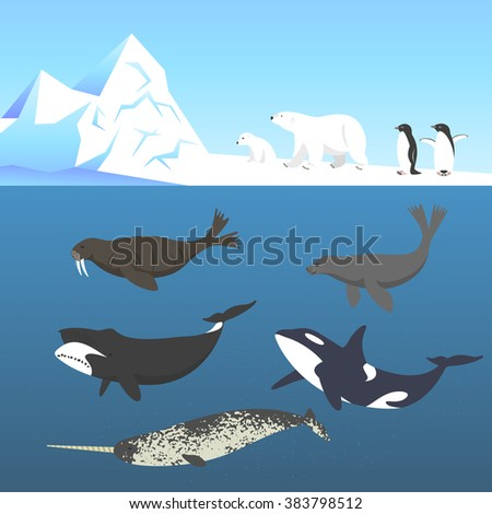 Vector set of animals living in a cold climate. Polar bear, penguin, bowhead whale, walrus, narwhal, seal, killer whale or orca. - stock vector