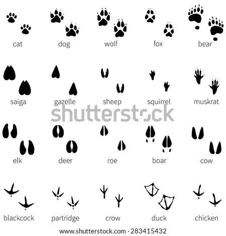 Vector Set of 20 Black Animal Footprints Icons - stock vector