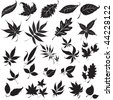 "Vector set of black floral design elements (from my ""Big floral collection"") - stock vector"