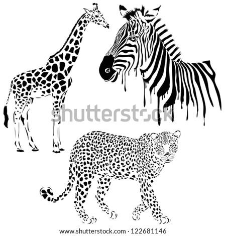 Vector set of black silhouette wild animals, zebra, leopard, giraffe - stock vector