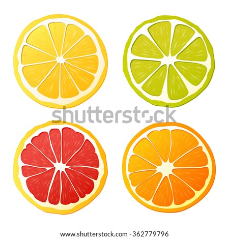 Vector set of citrus fruits. Isolated fruit slices on the white background. - stock vector