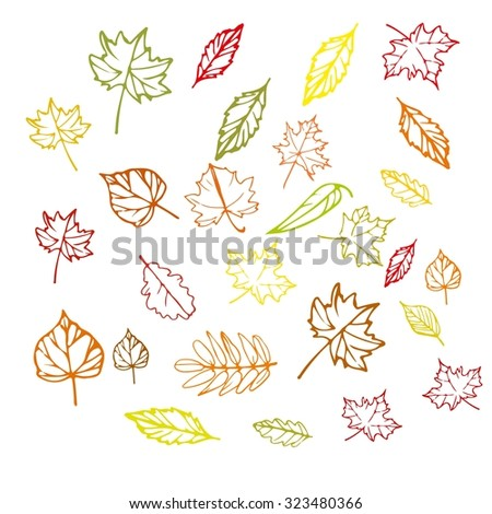 Vector set of colorful leaves, collection of hand drawn Autumn leaves. Hand drawn autumn leaves isolated. - stock vector