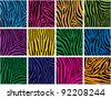 vector set of colorful skin textures of zebra - stock photo
