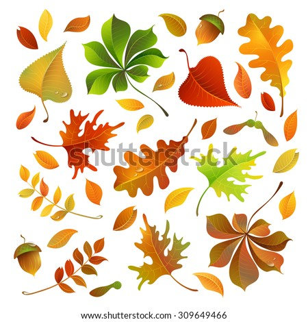 Vector set of colourful autumn leaves. Oak, maple, birch, rowan, chestnut leaves and acorn for your design isolated on white background. - stock vector