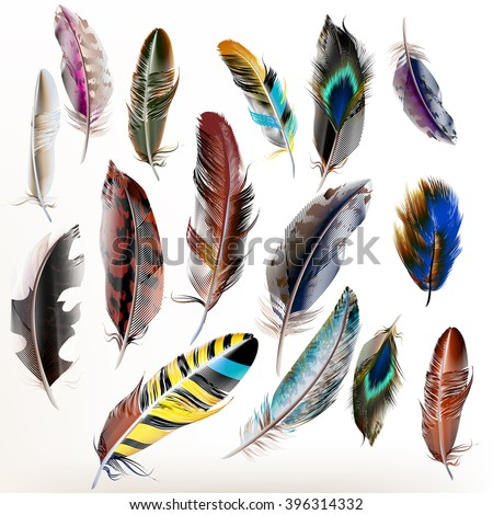 Vector set of  detailed bird feathers in realistic style - stock vector