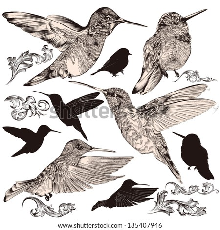 Vector set of detailed hand drawn birds for design - stock vector