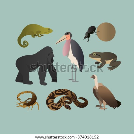 Vector Set Of Different African Animals. Animals of the African savanna Gorilla, Scorpio, Scarab twisting ball, Chameleon, Python, goliath frog, Marabou, Grif. Flat Style. - stock vector