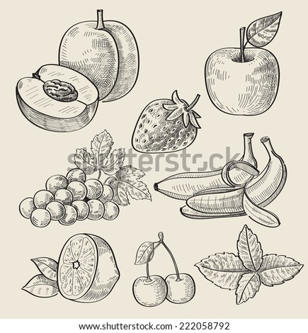vector set of different hand drawn fruit - stock vector