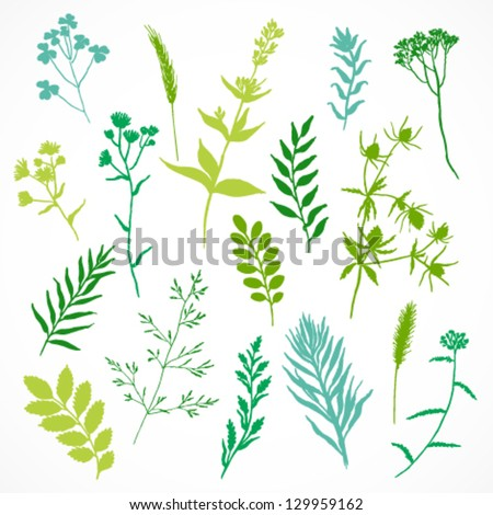 Vector set of floral elements, herbal silhouette - stock vector