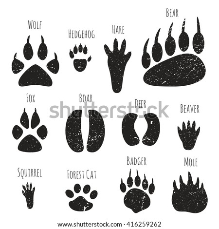 Hoof Stock Photos Royalty Free Images Amp Vectors