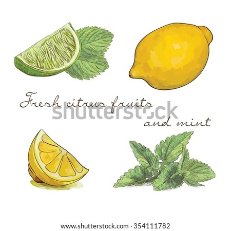 vector set of fresh citrus fruits and mint for different beverage - stock vector