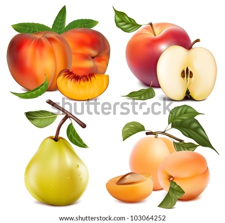 Vector set of fruits: apples, apricots peaches and pear - stock vector
