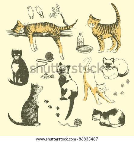 Vector  set of hand drawn cats. - stock vector