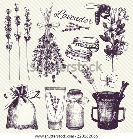 Vector set of ink hand drawn lavender illustration in lilac color. Vintage collection of lilac lavender flowers sketch. - stock vector