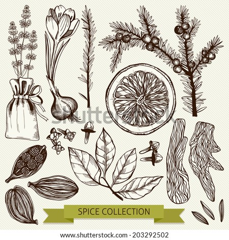 Vector set of ink hand drawn spices, herbs and citrus fruits  isolated on vintage  background.Hand sketched kitchen illustrations. - stock vector