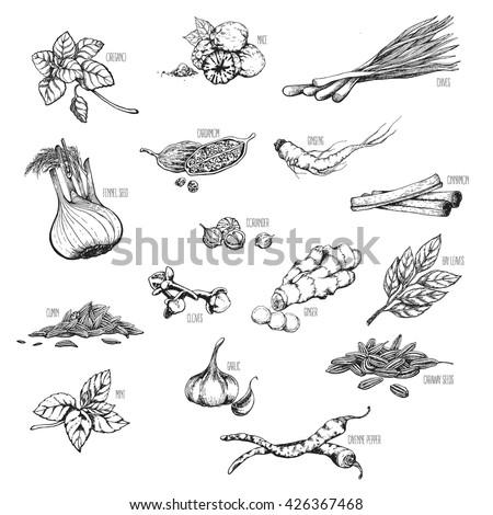 vector set natural medicinal herbs spices stock vector