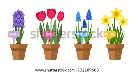 Vector set potted spring flowers labels stock vector 592189688 vector set of potted spring flowers with labels flat style mightylinksfo