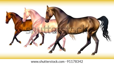 Vector set of realistic different horse's colors - stock vector
