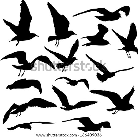 Vector set of silhouettes of 15 flying seagulls - stock vector