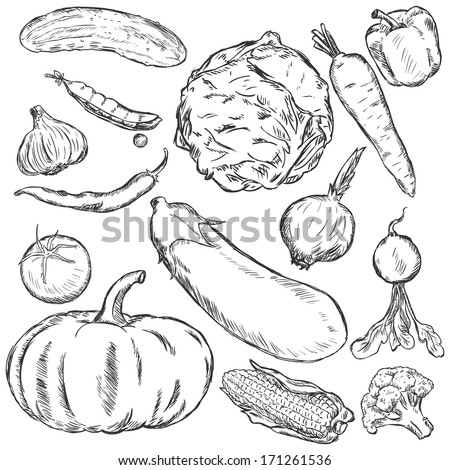 vector set of sketch vegetables - stock vector