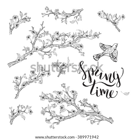 Vector set of spring branches isolated on white background. Blossoms, leaves, branches and bird contours. Hand-written brush lettering. Spring time. Coloring book elements template. - stock vector