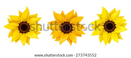 Vector set of three orange and yellow sunflowers isolated on a white background. - stock vector