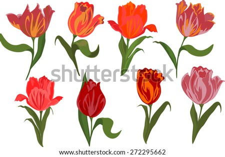Vector set of tulips. Isolated objects. - stock vector